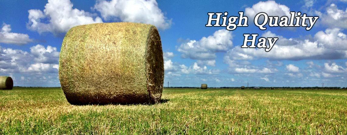 High Quality Hay Bales